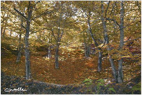 Imagen de la muestra El Bierzo, un hechizo de color, de Manuel Ovalle
